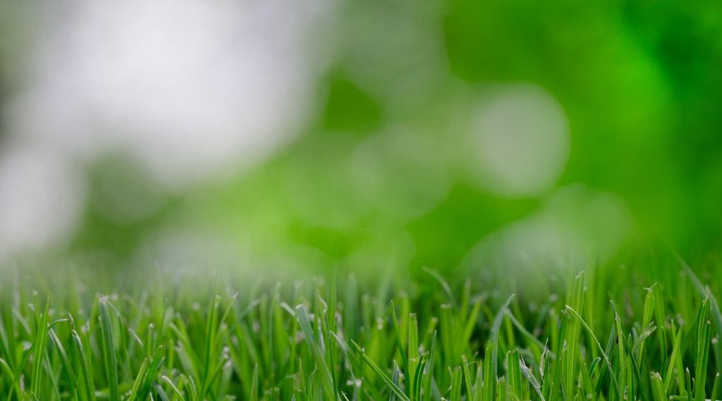Refaire une belle pelouse